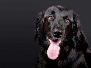 Therapiehund Steuererklärung