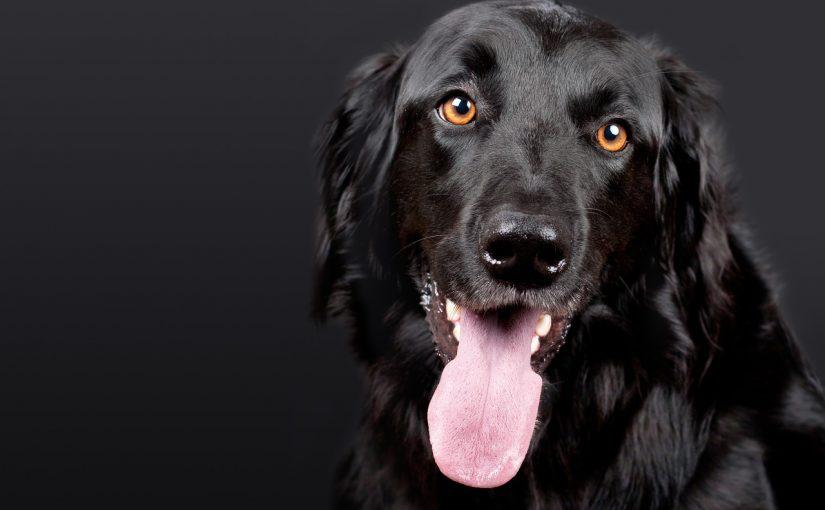 Therapiehund steuerlich absetzen | Foto: (c) Chiemsee2016/pixabay.com