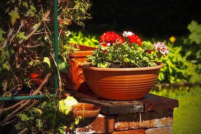 Was Mieter wissen müssen,wenn ein Garten zur Wohnung gehört | Foto:(c) PeterDargatz/ pixabay.com