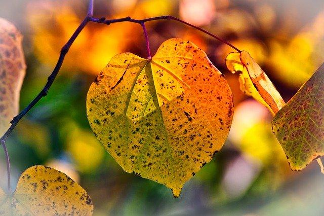 Gartenarbeit Herbst Regeln | Foto:(c) 9883074/pixabay.com